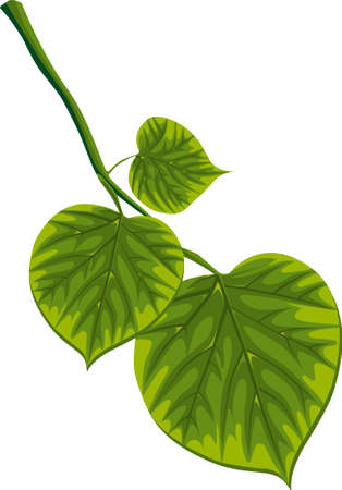 green leaf Illustration