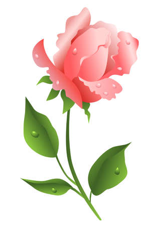 Beautiful pink rose, vector illustration