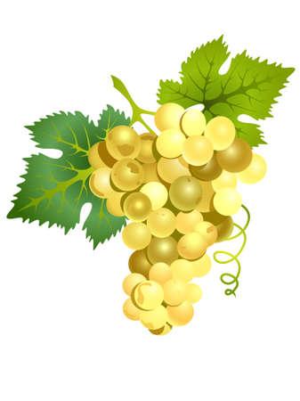 Illustration vectorielle de raisins blancs réalistes