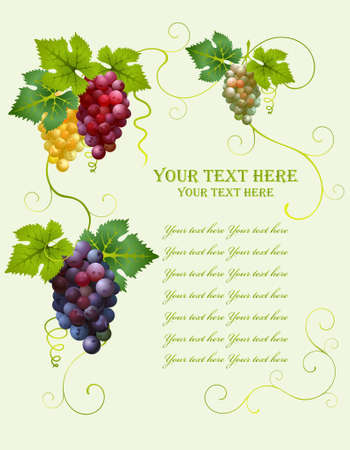 Vector grape frame from different cluster of grapes Illustration