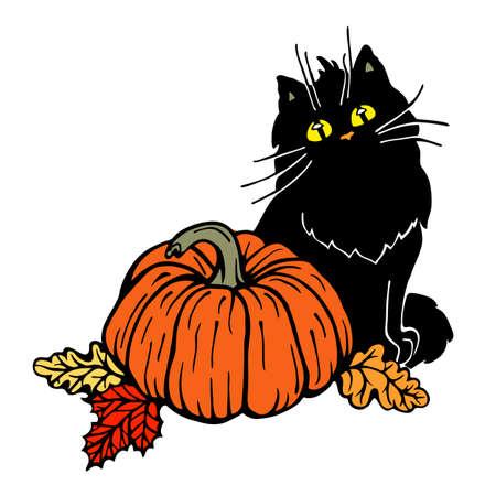 Black cat and pumpkin Illustration