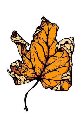 Realistic Colorful Autumn maple leaf vector illustration