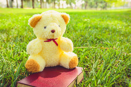 loveliness: Image doll bear  and tiny book in the public park  take photographs in the afternoon  give , get bright light and the loveliness of bear doll