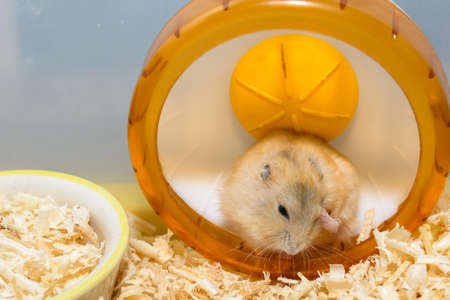 cute hamster: The image of a cute Hamster toys are inside the house itself