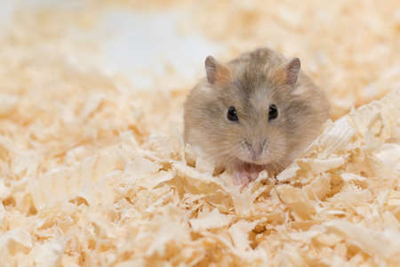 laughable: Photographers want to present performances of Hamster