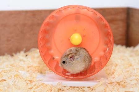 Fotografen wollen Aufführungen von Hamster zu präsentieren Standard-Bild