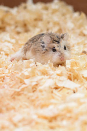infantile: The photographer wanted to convey the life of a hamster