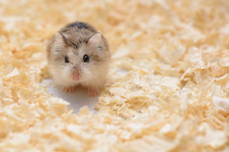 convey: The photographer wanted to convey the life of a hamster