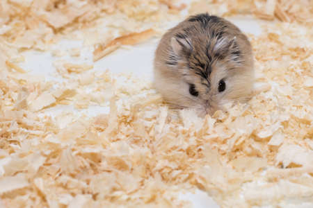 laughable: The photographer wanted to convey the life of a hamster