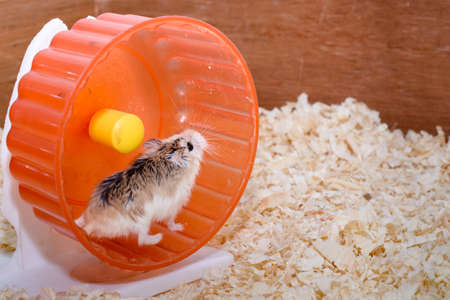 Der Fotograf wollte das Leben eines Hamsters zu vermitteln