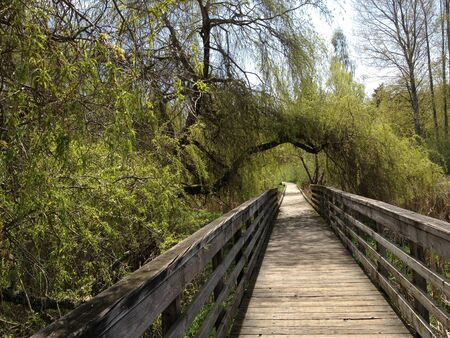 Overgrown Boardwalk