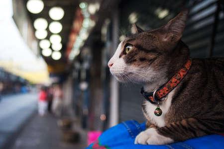 thanon: Cat at Wayside,Thanon Khao San
