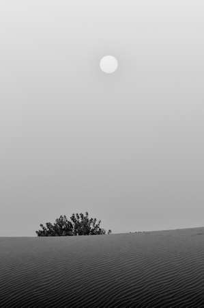 Lonely tree in desert photo