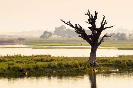 dead duck: Lonely Dead tree in Twilight