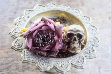 corpse flower: Skull human model with lotus flower on Phan (Tray) Stock Photo