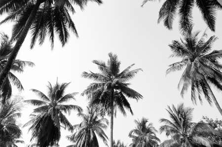 Coconut palm trees against a  sky  Coconut palm trees Stok Fotoğraf