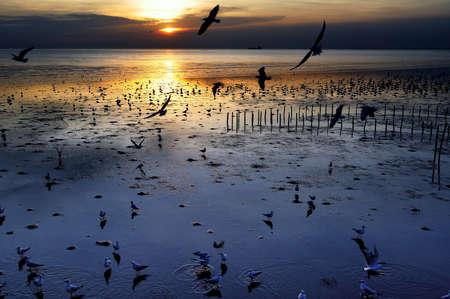 Beautiful sunset in seascape scene