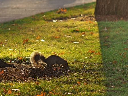 a squirrel on the field