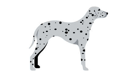 Dalmatian. Full height dog, silhouette. Vector isolated illustration of a thoroughbred dog. Ilustrace
