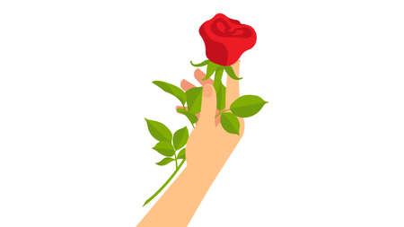 Hand holding a single red rose. Symbol of love, affection, togetherness. White background.