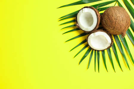 Two coconut one of which split with palm branch on color background