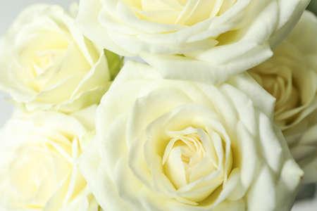 Hermosas rosas blancas frescas como fondo, primer plano