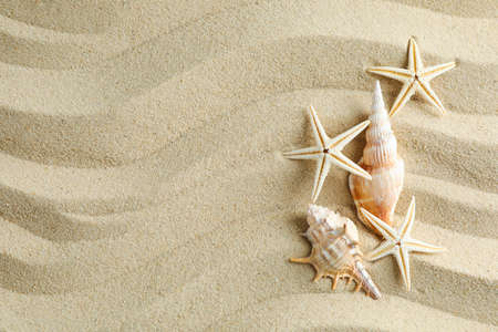 Clear sea sand with seashells and starfishes, space for text. Summer vacation background
