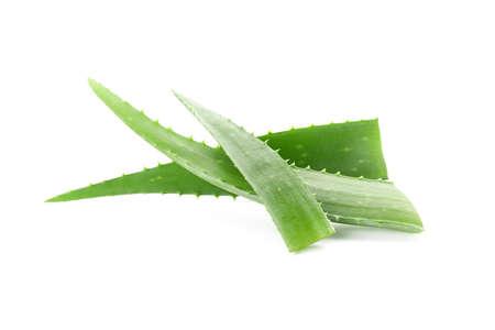 Aloe vera fresh leaves isolated on white background. Treatment plant