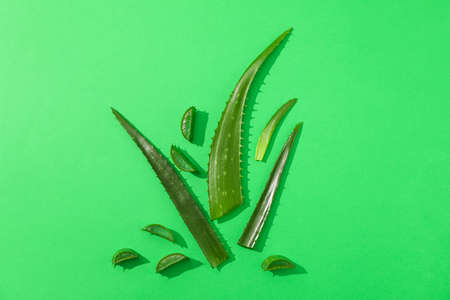 Aloe vera leaves and slices on color background, space for text. Natural treatment