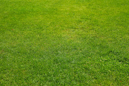 Fresh green grass texture. Natural background, space for text Banque d'images - 128744237