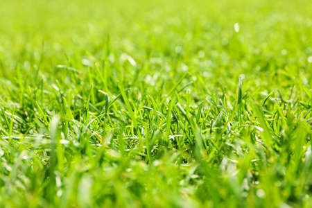 Fresh green grass texture. Natural background, close up Banque d'images - 128744236