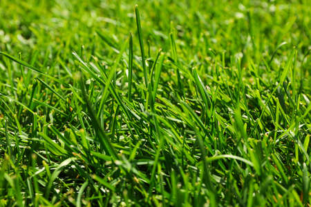 Fresh green grass texture. Natural background, close up Banque d'images - 128745635