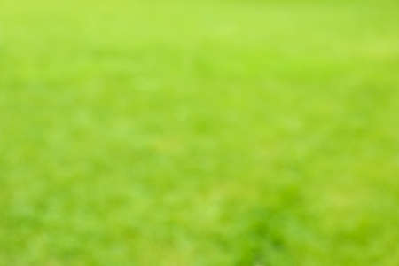 Fresh green grass texture. Blurred background, space for text Banque d'images - 128746072
