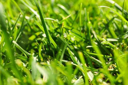 Fresh green grass texture. Natural background, close up Banque d'images - 128746097