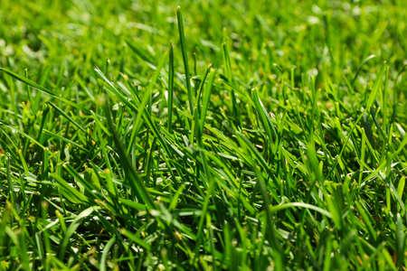 Fresh green grass texture. Natural background, close up Banque d'images - 128746170