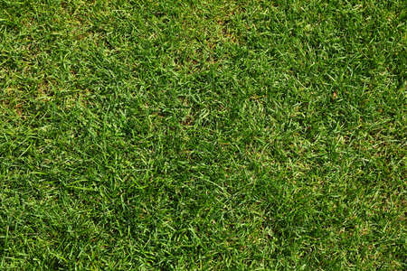 Fresh green grass texture. Natural background, space for text Banque d'images - 128746169