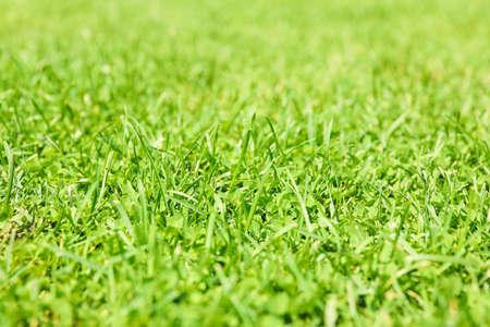 Fresh green grass texture. Natural background, close up Banque d'images - 128746286