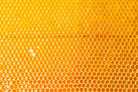 Favi con miele dorato dolce su tutto lo sfondo, primo piano Archivio Fotografico