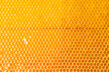 Honeycombs with sweet golden honey on whole background, close up Imagens