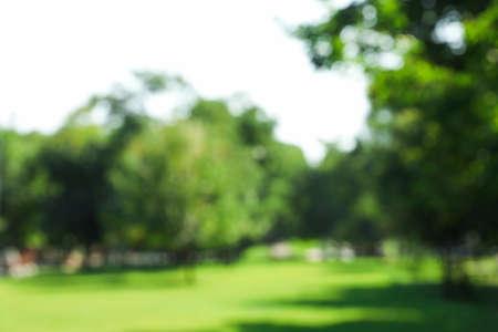 Niewyraźne tło zielonego parku letniego, miejsce na tekst Zdjęcie Seryjne