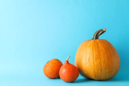 Pumpkins on blue background, space for text Stockfoto