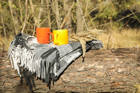 Color cups and plaid on trunk. Beautiful forest, space for text Stockfoto