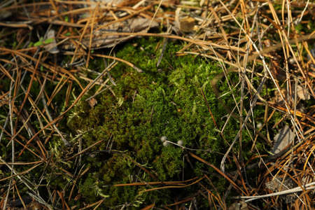 Green moss texture, close up and space for text