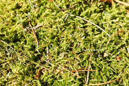Green moss texture, macro and space for text