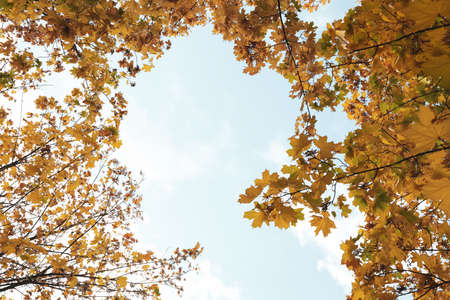 Trees with yellowed leaves against blue sky. Autumn landscape Standard-Bild - 133927411
