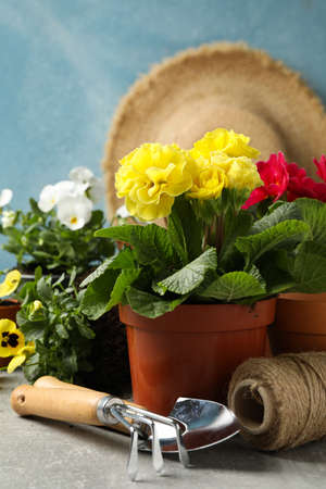 Flowers, gardening tools and accessories on grey table, close up