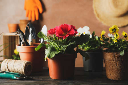 Flowers and garden tools on wooden table, close up