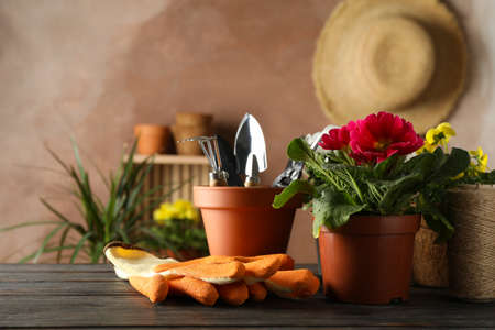 Flowers and garden tools on wooden table, space for text Stockfoto