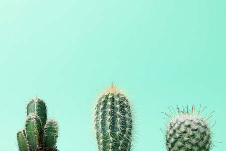 Cacti on mint background, space for text