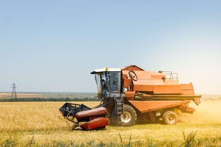 Red combine harvester in barley field. Agricultureure and farming